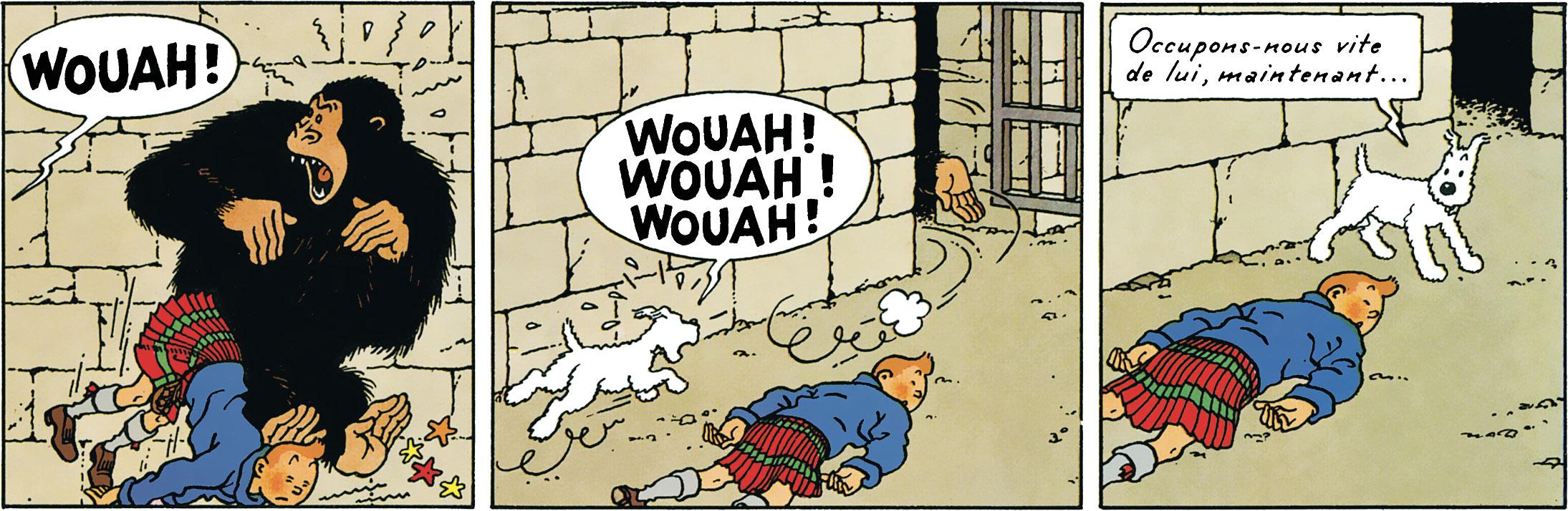 Le gorille Ranko assome Tintin et Milou lui fait peur dans l'ile noire